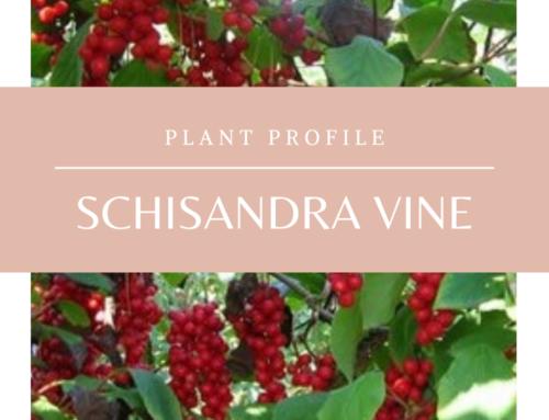 Plant Profile: Schisandra Vine